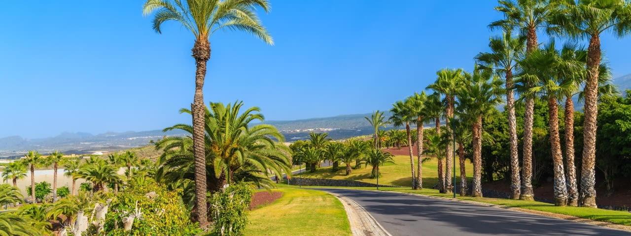 kanaren teneriffa strasse palmen spanien fotolia 100376232